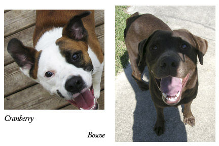 Boscoe and Cranberry, S.A.F.E. dogs