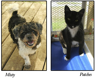 Misty and Patches, adoptable dog and cat at S.A.F.E.