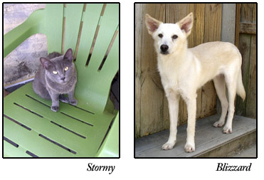 Stormy and Blizzard, adoptable cat and dog at S.A.F.E.