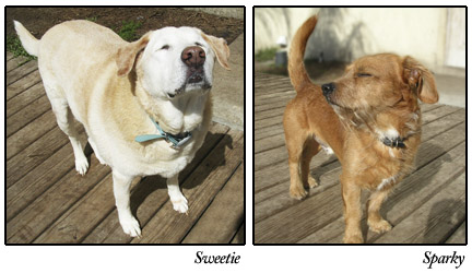 Sweetie and Sparky, S.A.F.E. dogs
